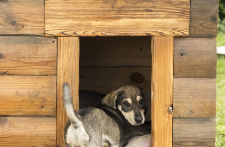 Buda dla psa – jak zrobić budę dla pieska?