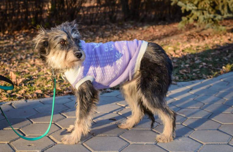 Ubranka dla psa – Jakie rasy psów powinny nosić ubranka zimą?