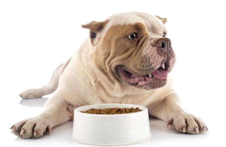 Karma dla psa – jak zrobić zdrową domową karmę dla psa?
