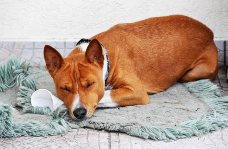 Jak przygotować legowisko dla psa za darmo?