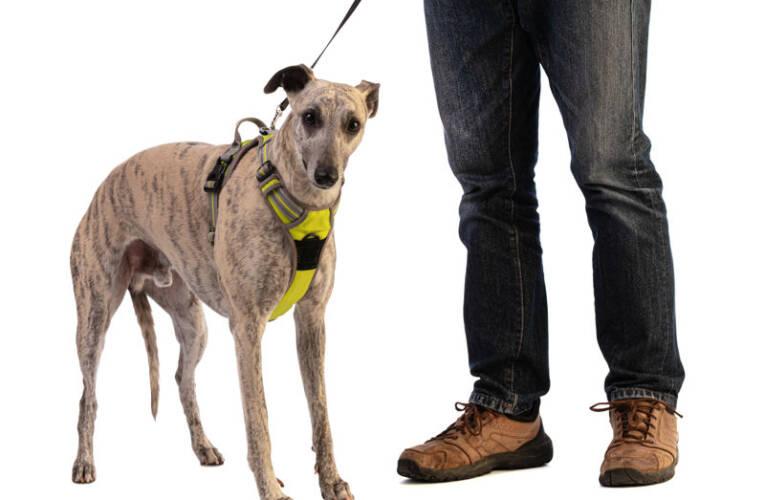 Szelki dla psa – Co to jest i kiedy warto w nie zainwestować?