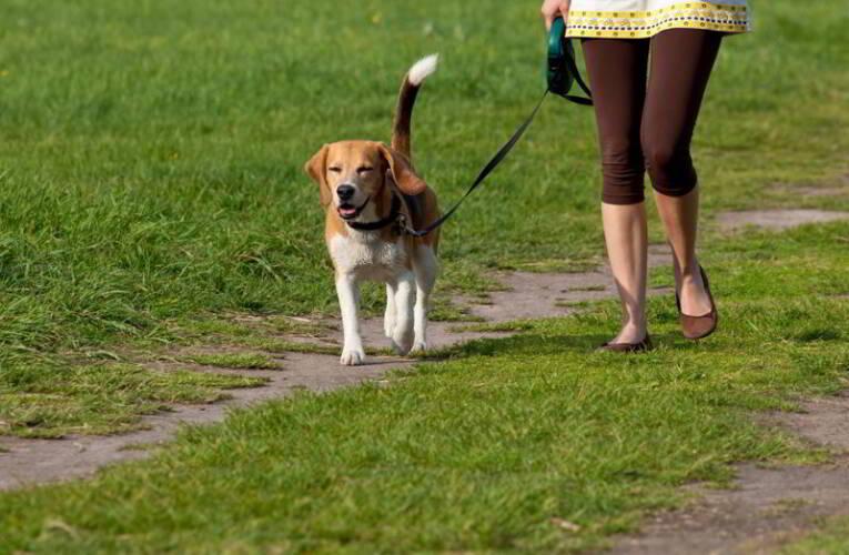 O czym pamiętać wybierając się na spacer z psem?